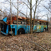 This old city bus was parked long ago in northern Hamilton County, Indiana.  The trees have grown around it and in some spots, through it!