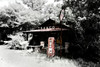 Abandoned vintage Texaco station in South Carolina.  Infrared with spot color.